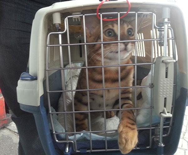 Перелет в самолете котов